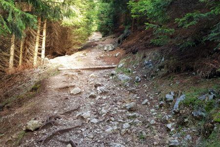 Kriška gora - zadnja strmina.jpg