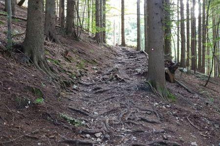 Kriška gora - po koreninah.jpg