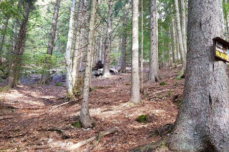 Kriška gora - ovce pri Pajotovi klopci.jpg